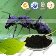Natural Ratio Extract Black Ant Powder