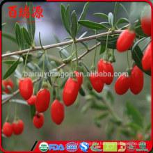 Высокое качество ягоды годжи ягоды Годжи органические годжи сохранить стройную фигуру