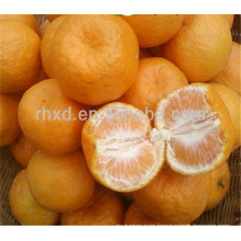 2017 new crop export oranges from China
