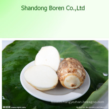 Taro with High Quality in Hot Sale