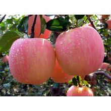 Высокое качество Delicious Fresh FUJI Apple