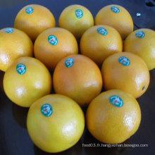 Fournisseur régulier pour Orange Fresh Navel chinois