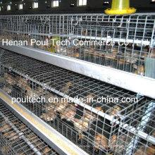 Chicken Farm Pullet Chicken Cage (New Type)