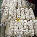 Best Prepacked White Garlic