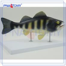 PNT-0822 Modelo anatômico de peixes, modelo de dissecação de peixes