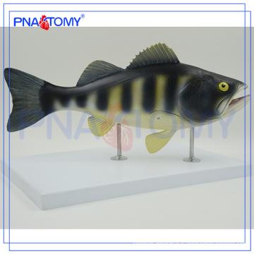 ПНТ-0822 анатомическая модель,модель взрезывания рыбы