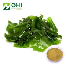Kelp Extract Fucoidan Powder