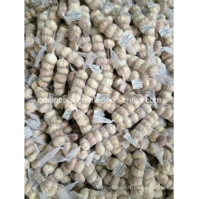Chinese Garlic 5p 200g Jordan Markets