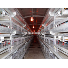 los pollos reproductores promedio de la jaula de la batería para las capas