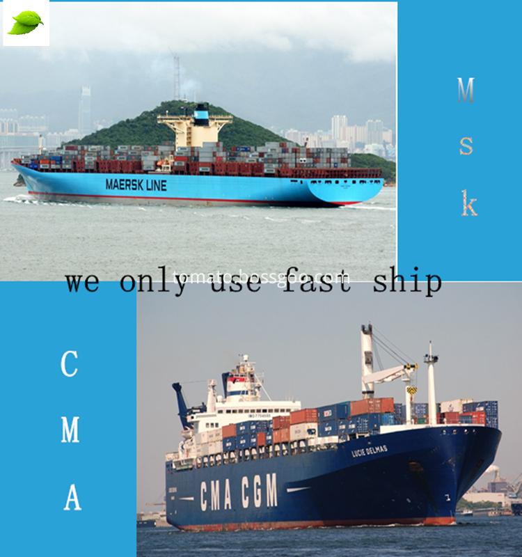 SHIP+