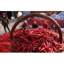 Nowe chińskie suszone chili