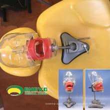 Verkaufen 12559 Sucker Typ Phantom medizinische Wissenschaft pädagogische Zahn Lehre