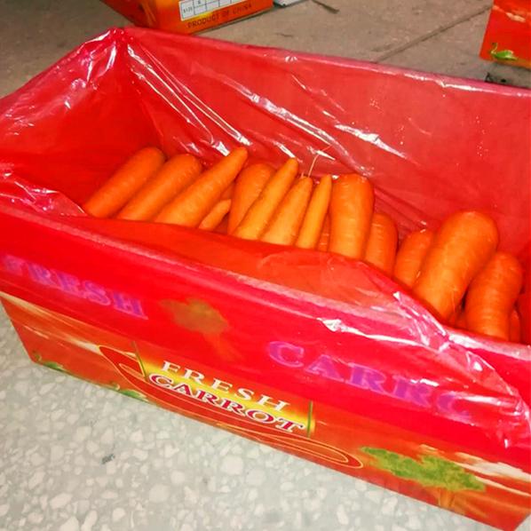 China Carrot