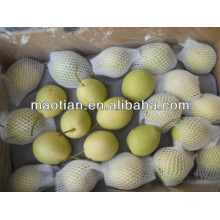 Fresh Shandong Pear New Season Crop