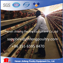 Automatic Chicken Cage Design for Layers in China