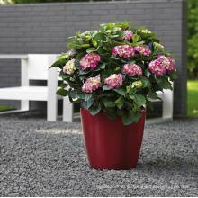 (BC-F1032) Potenciômetro de flor Self-Watering plástico do projeto elegante