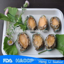 Wholesales lip abalone in shell