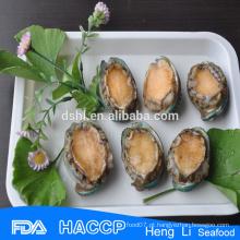 Abalone nutrição mais vendida