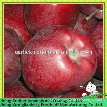 China red huaniu apple factory