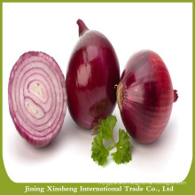 High quality lowest price fresh red onion