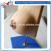 Modelo médico de la anatomía del pecho