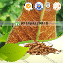 High Quality Herb Medicine Pyrrosia Leaf