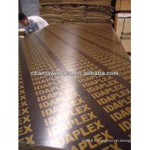 Plaque de contreplaqué marine 12mm / contreplaqué filmé pour le marché Oman