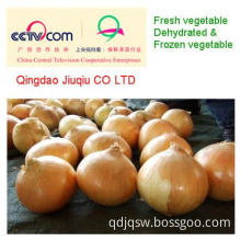 JQ Fresh Yellow Onion Size of 5-7cm 6-8cm