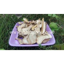 Colheita de Embalagens a Granel Cogumelo de Porcini Fatia Orgânica Funghi Seca