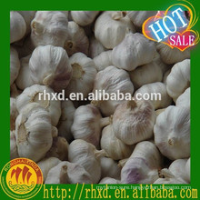 10kg carton garlic, red garlic white garlic, garlic price