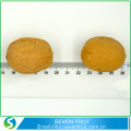 Superior Grade Raw Unshelled Walnuts In The Shell Size 34 mm