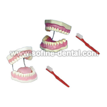 Dental Pädagogisches Modell