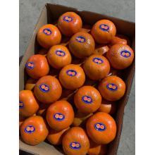 Super  Fresh Orange