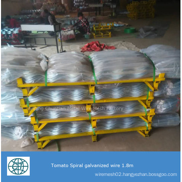 Galvanized Tomato Spiral Support for Planting Climp