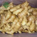 горячая распродажа 250 г свежего имбиря сушеный имбирь