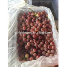 Traubenfabrik / rote Trauben / beste frische rote Trauben