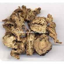 Factory Natural Ligusticum Wallichii Extract Powder
