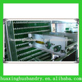 Automatic chicken egg collecting machine system for sale