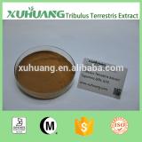 Kosher Halal ISO 9001 Factory Supply Tribulus terrestris 90% saponins/Terrestris Extract