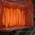 Zanahorias frescas chinas deliciosas estupendas en venta