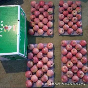 Nova safra Qinguan Apple está chegando