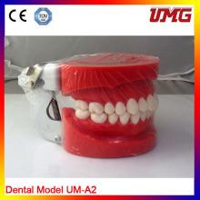 Modelo de Dentição Padrão Removível