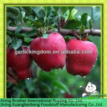Großhandel China huaniu Apfel