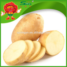 High quality Yellow Potatoes Free of Contamination
