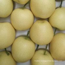 Exporter la qualité standard de la poire d'or fraîche