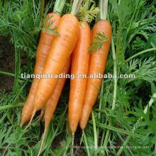 Prix de la carotte fraîche