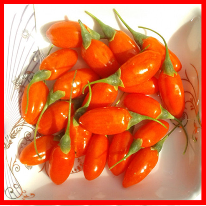 2018 colheita baixa pesticida seca goji berry for sale