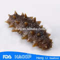Top qualty frozen sea cucumber