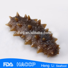 HL011 Frozen Sea Cucumber for export vacuum package