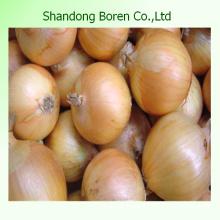 2015 Wolkable Fresh Yellow Onion, Fresh Yellow Onion From China